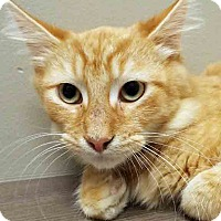 Adopt A Pet :: Donald - Shorewood, IL