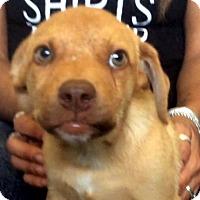 Adopt A Pet :: Andrea (VIDEO) - Los Angeles, CA