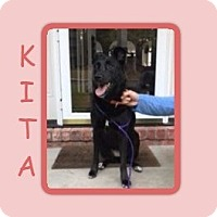 Adopt A Pet :: KITA - Dallas, NC