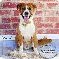 Adopt A Pet :: ROSCOE - Lubbock, TX