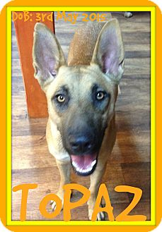 German Shepherd Dog Mix Dog for adoption in Manchester, New Hampshire - TOPAZ