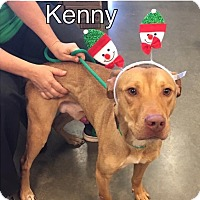 Adopt A Pet :: Kenny-URGENT - Plainfield, CT