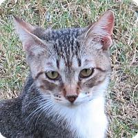 Adopt A Pet :: Hobie - Gonzales, TX