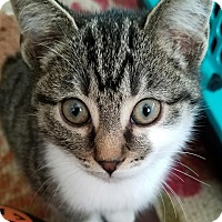 Adopt A Pet :: Audi - Greensburg, PA
