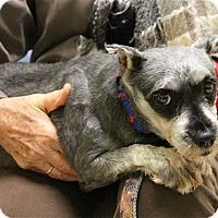Adopt A Pet :: Blackberry - Elyria, OH
