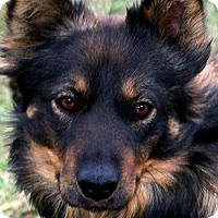 Adopt A Pet :: REUBEN(A TRUE COMPANION)WOW! - Wakefield, RI
