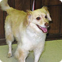 Adopt A Pet :: Chip - Tavares, FL