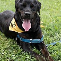 Adopt A Pet :: Diesel - Franklin, IN