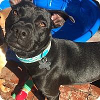 Adopt A Pet :: Cassadee (BH) - Santa Ana, CA
