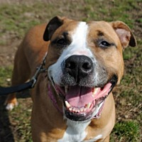 Adopt A Pet :: Zena - Spring Lake, NJ