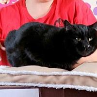 Adopt A Pet :: Olive - Lemoore, CA