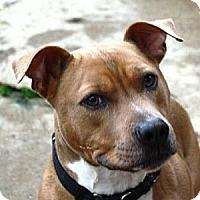 Adopt A Pet :: Danny - Fredericksburg, VA