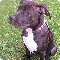 Adopt A Pet :: Maizzy - Roaring Spring, PA