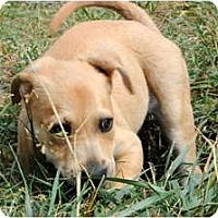 Adopt A Pet :: Kaleb - Alexandria, VA
