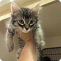 Adopt A Pet :: Squiggy - Stafford, VA
