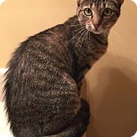 Adopt A Pet :: Suzie - Merrifield, VA