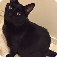Adopt A Pet :: Prada - Novato, CA