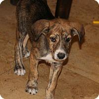 Adopt A Pet :: Mona - Phoenix, AZ