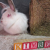 Lionhead Mix for adoption in Newport, Delaware - Kimber