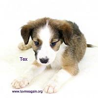 Adopt A Pet :: Tex - Bloomington, MN