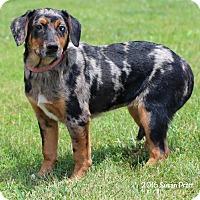 Adopt A Pet :: Singe - Bedford, VA