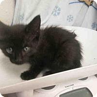 Adopt A Pet :: *FRITZ - Upper Marlboro, MD
