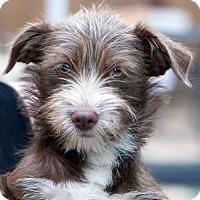 Adopt A Pet :: Wilkenson - San Diego, CA