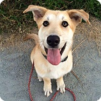 Adopt A Pet :: Wagger - Pitt Meadows, BC