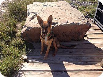 German Shepherd Dog Mix Dog for adoption in Wichita Falls, Texas - Hannah