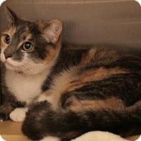 Adopt A Pet :: Callie - Sacramento, CA