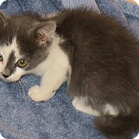 Adopt A Pet :: Cypress - Bedford, VA