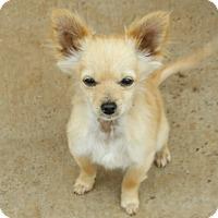 Adopt A Pet :: Mojo - Las Cruces, NM
