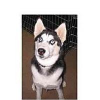 Adopt A Pet :: Mya - Belleville, MI