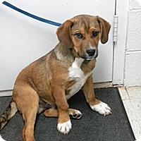Adopt A Pet :: Colby - Lancaster, VA