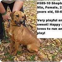 Adopt A Pet :: # 589-10 @ Animal Shelter - Zanesville, OH