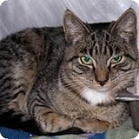 Adopt A Pet :: Daryl - El Cajon, CA