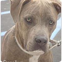 Adopt A Pet :: Cinnabun - Lake Forest, CA
