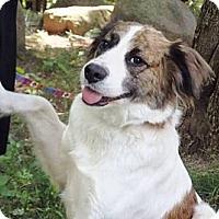 Adopt A Pet :: Paisley - Osseo, MN