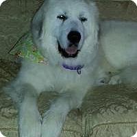 Adopt A Pet :: Victoria - adopted! - Ascutney, VT