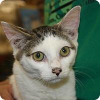 Adopt A Pet :: Walter (MP) - Little Falls, NJ