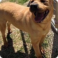 Adopt A Pet :: Mundo - Farmingtoon, MO