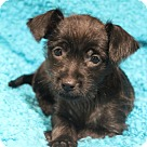 Adopt A Pet :: Isles
