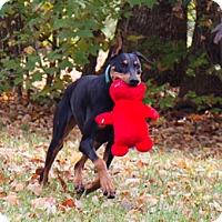 Adopt A Pet :: SORCERY - Greensboro, NC
