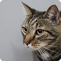 Adopt A Pet :: Yoshi - Sarasota, FL