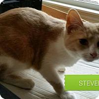 Adopt A Pet :: Steven - Fairborn, OH