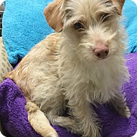 Adopt A Pet :: Floppy - Phoenix, AZ