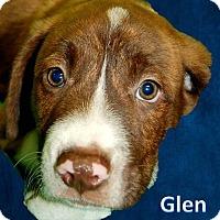 Adopt A Pet :: Glen - Modesto, CA