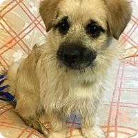 Adopt A Pet :: Orville - Phoenix, AZ