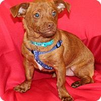 Adopt A Pet :: Rusty - Umatilla, FL