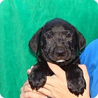 Adopt A Pet :: Gypsy - Oviedo, FL
